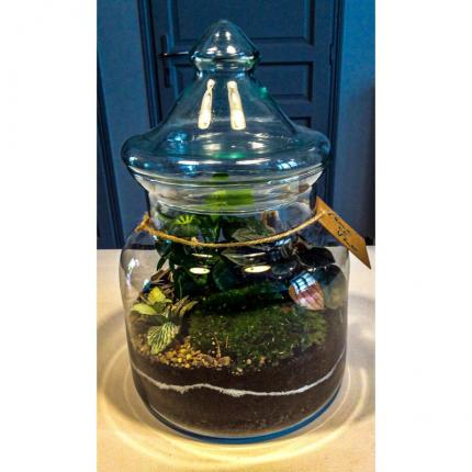 ERIS I Terrarium mini jardin de verre autonome vintage made in france